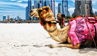 Colombo to Dubai LKR : 46363.00